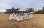 """Εικόνα για το άρθρο """"Με drones παράδοσης πακέτων πειραματίζονται στο Google X"""""""